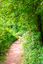 Footpath in summer green forest at sunny day Stock Photography