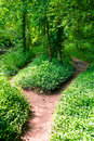 Footpath in summer green forest at sunny day Royalty Free Stock Photo