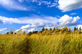 Footpath among the tall grass under the blue sky with white clou clouds over a field a high yellow and of her Royalty Free Stock Image