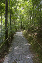 Footpath to forest Royalty Free Stock Photography