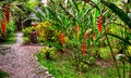 Footpath in tropical garden Royalty Free Stock Photo