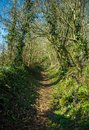stock image of  Footpath through typical British English woodland in spring