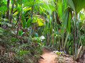 Footpath In The Vallee De Mai ...