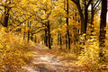 Footpath among yellowed trees in autumnal park Stock Photo