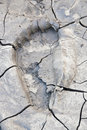 Footprint on dry mud. Stock Photos