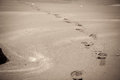 Footprint in sandy beach Royalty Free Stock Photo