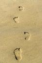 Footprint on a sandy beach Royalty Free Stock Photo