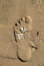Footprint with white seagrass on beach human embedded in in africa Stock Images