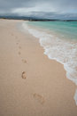 Footprints along beautiful beach shore, Galapagos Royalty Free Stock Photo