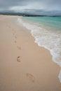 Footprints along beautiful beach shore, Galapagos Royalty Free Stock Photo