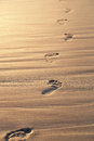 Footprints on the beach close up of sand at sunset with copy space Royalty Free Stock Images