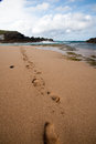 Footprints on the beach in sand leading along waters edge Stock Images