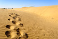 Footprints of camel on Sand dunes, SAM dunes of Thar Desert of I