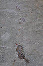 Footprints and dog tracks Royalty Free Stock Photo