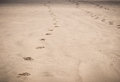 Footprints in sand on beach Royalty Free Stock Photo