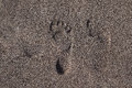Footprints in sand at the beach two near Royalty Free Stock Images
