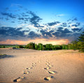 Footprints in the sand desert at sunset Stock Image