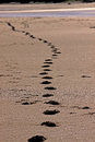 Footprints in sand fading into the distance along a beach Royalty Free Stock Photo