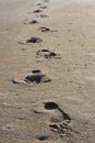 Footprints in the sand near the ocean shore. Royalty Free Stock Photo