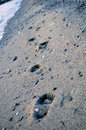Footprints in the sand at sea Royalty Free Stock Images