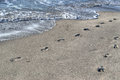 Footprints by the shore in Alghero Royalty Free Stock Photo