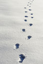 Footprints on snow Royalty Free Stock Photo