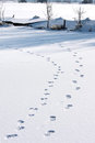 Footprints in the snow upon dutch ice Royalty Free Stock Photo