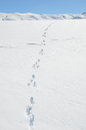 Footprints on the snow melchsee frutt switzerland Royalty Free Stock Photos