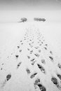image photo : Footprints in the snow