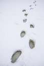 Footprints on snowy ground Royalty Free Stock Photo