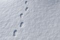 Footprints in snowy landscape Royalty Free Stock Photo