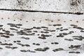 Footprints at snowy sidewalk Royalty Free Stock Photo