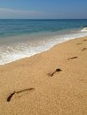 Footprints on the tropical sandy beach Royalty Free Stock Photo