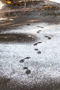 Footprints in wet path covered by first snow Royalty Free Stock Photo