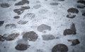 Footsteps in fresh wet snow Royalty Free Stock Photos