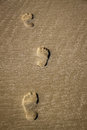 Footsteps in the sand on beach Stock Photos