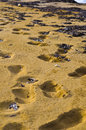 Footsteps in the sand sandy beach malta Stock Images