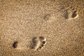 Footsteps in sandy on the beach Royalty Free Stock Photos