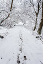 Footsteps through snow along covered woodland path Royalty Free Stock Photo