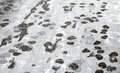 Footsteps in snow on asphalt urban road Stock Photography