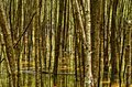 Forest abstract foresta della mangrovia Immagine Stock