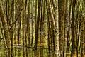 Forest abstract mangroven wald Stockbild
