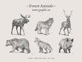 Forest animals vintage illustration set