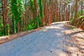 Forest asphalt road in the italian alps Royalty Free Stock Photos