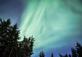 Forest with aurora alaskan borealis streaming in the night sky Stock Image