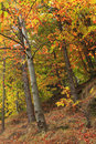 Forest in the autumn Stock Image