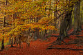The Forest in Autumn Stock Images
