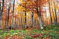 Forest in autumn colors of the Royalty Free Stock Photos