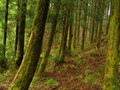 Forest azores rain at s miguel island Stock Photo