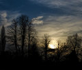 Forest bare trees silhouette against white clouds in sunset black at london park Stock Photography